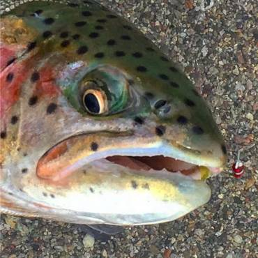 Pyramid Lake Fishing Report March 27 2018